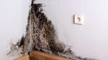 Dealing with mould