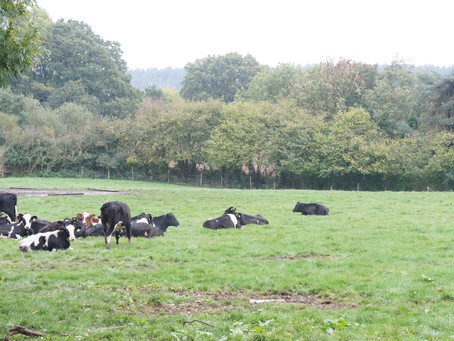 Partner Farm | Gold Oak Farm, Verwood