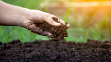 The ultimate guide to garden compost, additives and mulch