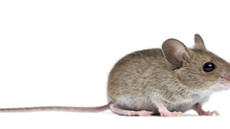 Pest control - A guide to effectively use rat and mouse poison.