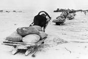Лыжный пробег в память об отправке легендарного обоза в блокадный Ленинград
