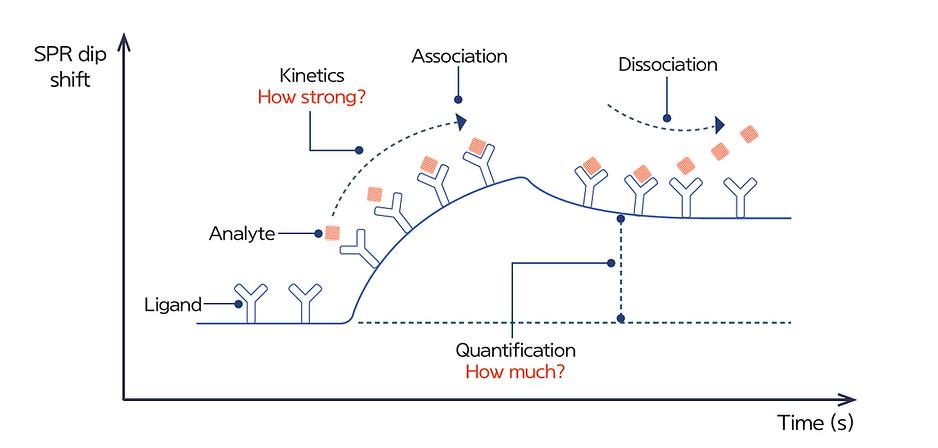 SPR kinetics sensorgram