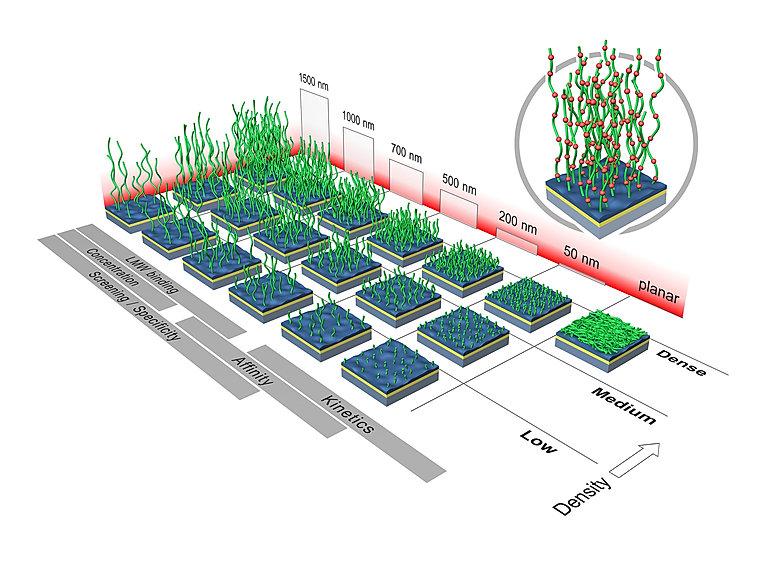 SPR sensor chip selection guide