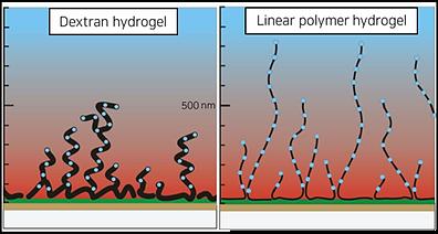 SPR sensor chip linear polymer surface