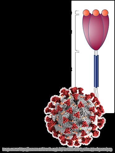 SPR sensor chip COVID-19 corona virus