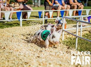 PCF PIG RACE LOGO.jpg