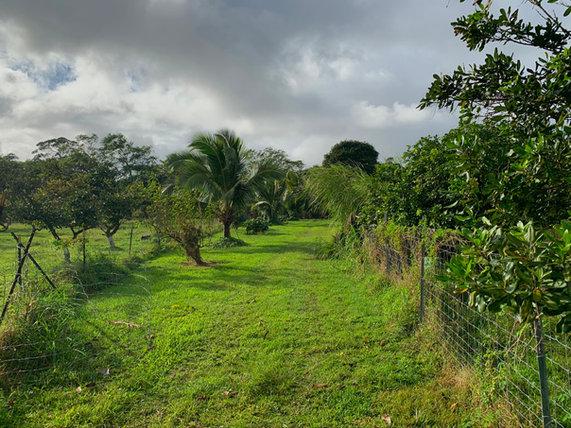 Puna Farm.JPEG