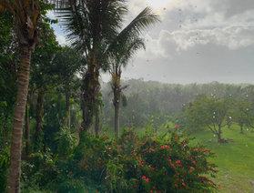Rainy Puna Farm.JPEG