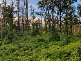 Hawaiian Jungle.JPEG