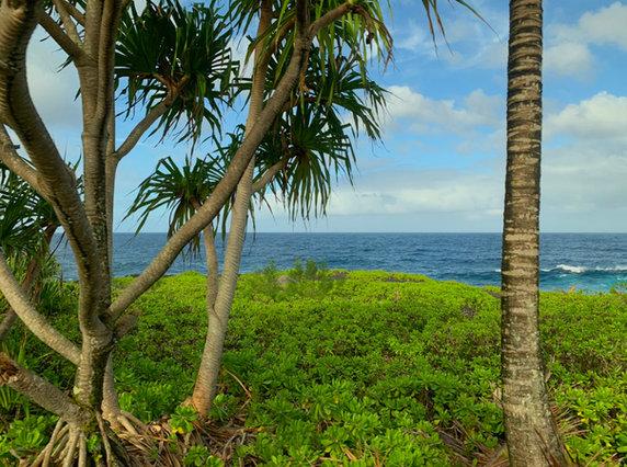 Hawaiian Coastal Neighborhood.JPEG