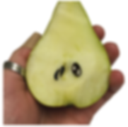 pear dissection image2.PNG