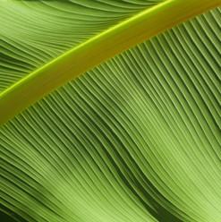 palm tropical design
