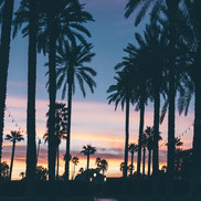 palm tree boardwalk