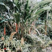tropical garden bed.jpg
