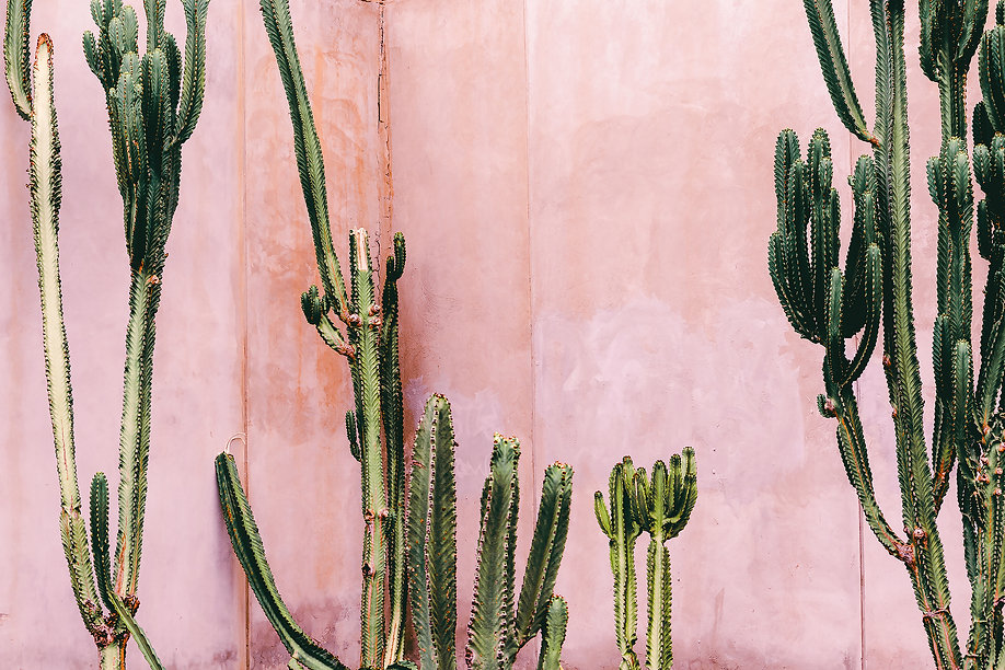 cactus pink wall.jpeg