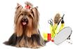 Ask-Lucy-Dog-Grooming-101-Austin-Woman-M