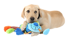 guide_dog_pup-removebg-preview.png