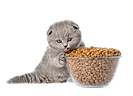 Is-dry-food-bad-for-cats-removebg-previe
