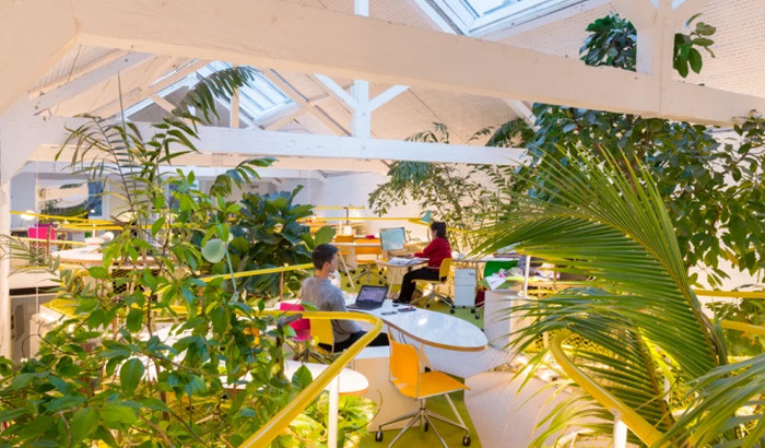 Espace de Coworking plantes Portugal des bureaux design pour travailler