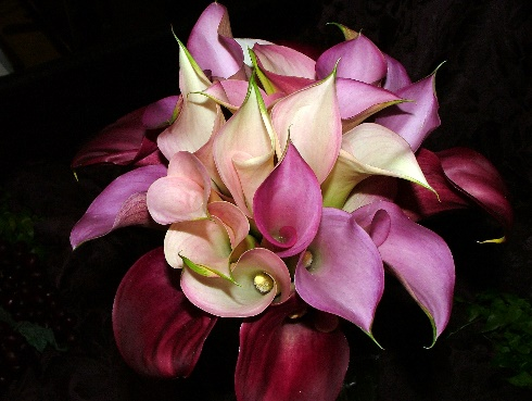 Timeless Calla Lily Collection