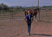 Working with horses