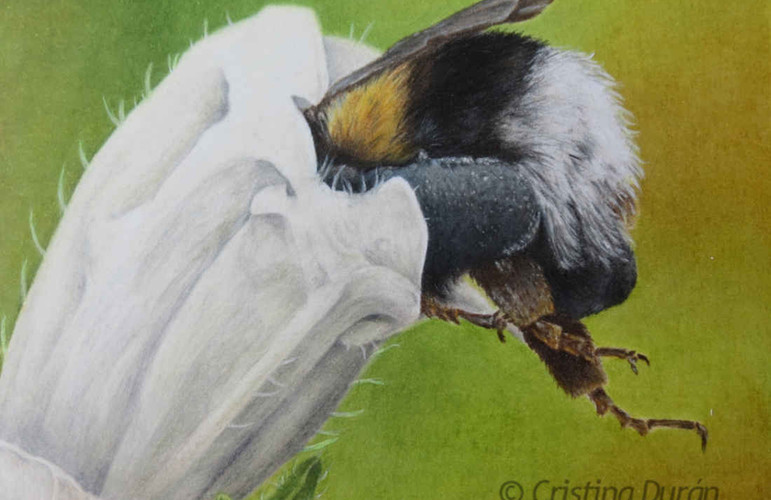 Colored pencils on watercolor paper