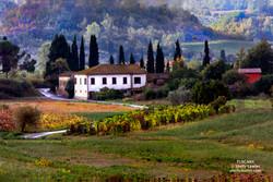 Tuscany Shelly Lawler Art