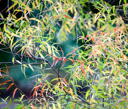 Shelly Lawler Wetland Series