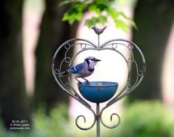 SHELLY LAWLER BIRD COLLECTION
