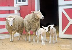Sheepie Family Shelly Lawler Art