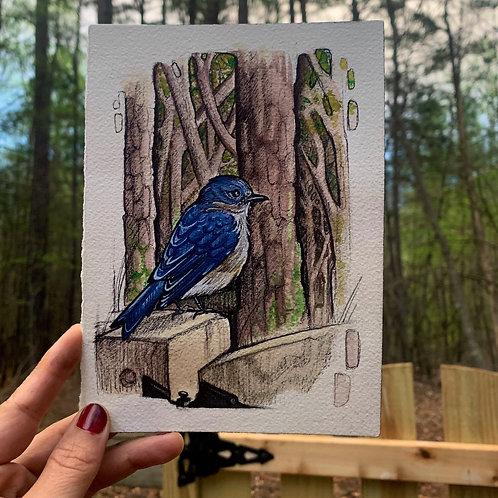 Blue Bird Art Print/Greeting Card