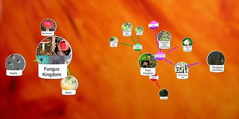Mind Mapping 3D 2019.04.27 10_44_36.png