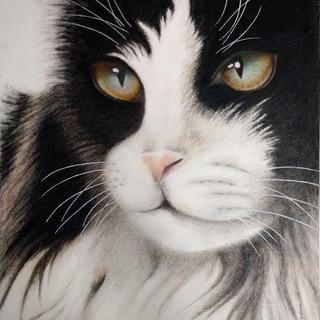 Eliana Bitencourt - Gato - Lapis de cor