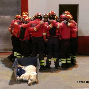 """Mientras bomberos de Ibarra despidieron a Dayko los de Otavalo integran a su equipo a """"Réplica&"""