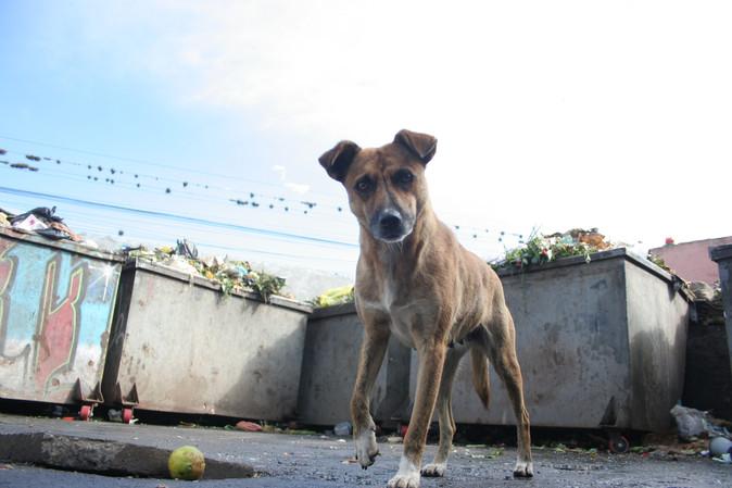En Ibarra imponen fuertes multas por abandonar mascotas o no limpiar sus excrementos en espacios púb