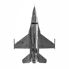 F16 ventral.jpg
