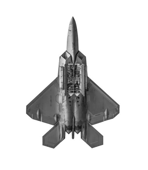 F22 ventral.jpg