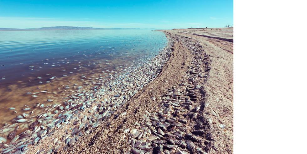Salton Sea-8.jpg