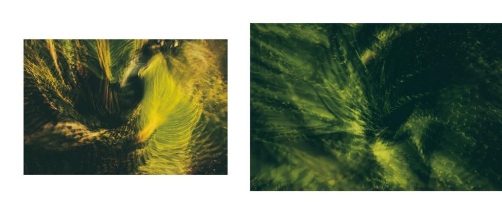 Flora-13.jpg