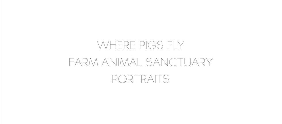 Where Pigs Fly-1.jpg