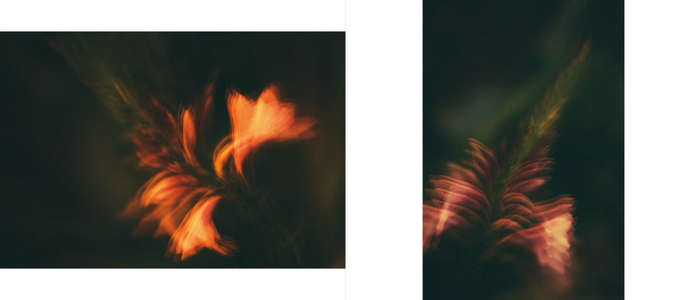 Flora-30.jpg