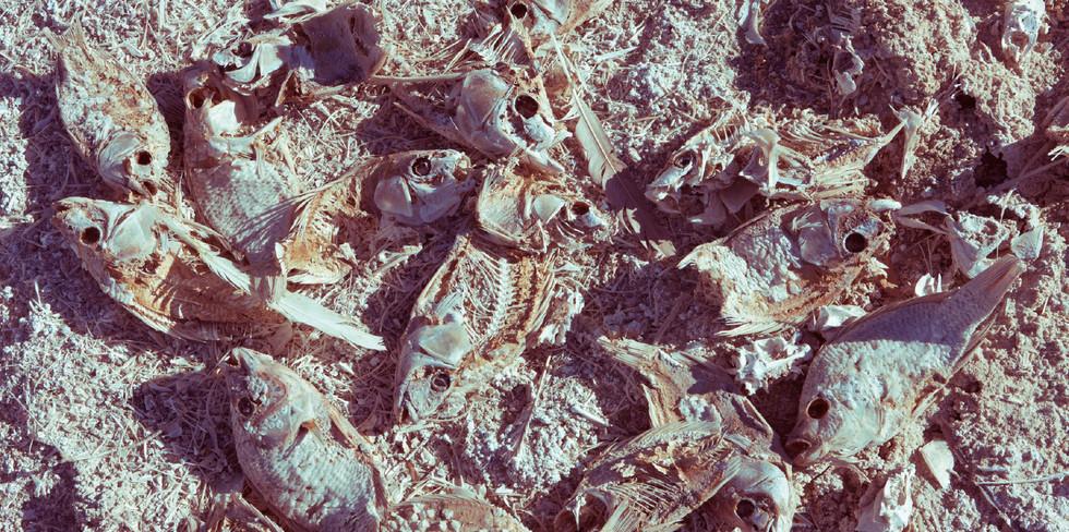 Salton Sea-16.jpg