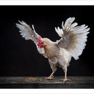 Chicken #1 to PK.jpg