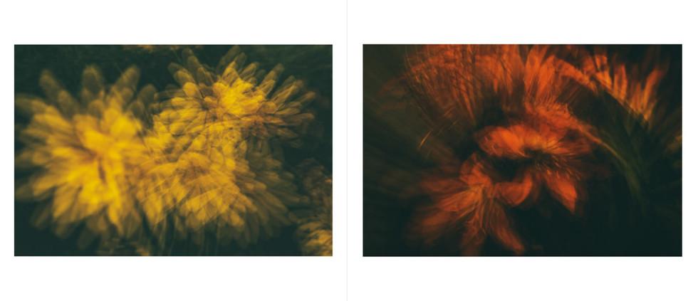 Flora-14.jpg