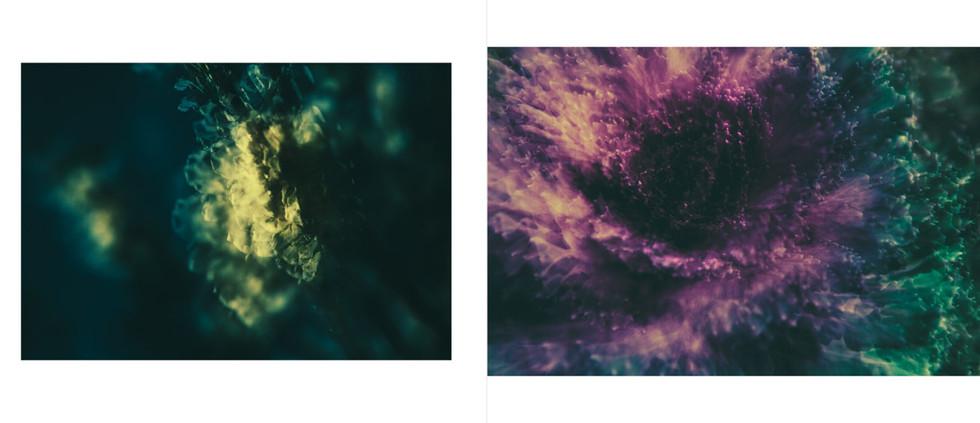 Flora-15.jpg