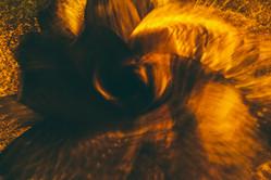 garysheppard-56f208601c66277.jpg