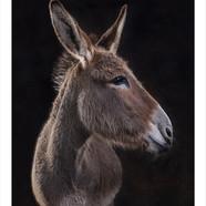Donkey .jpg