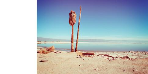 Salton Sea-11.jpg