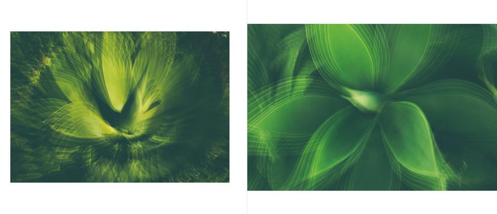 Flora-20.jpg