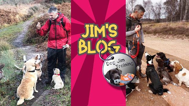 Blog Cover (2).jpg